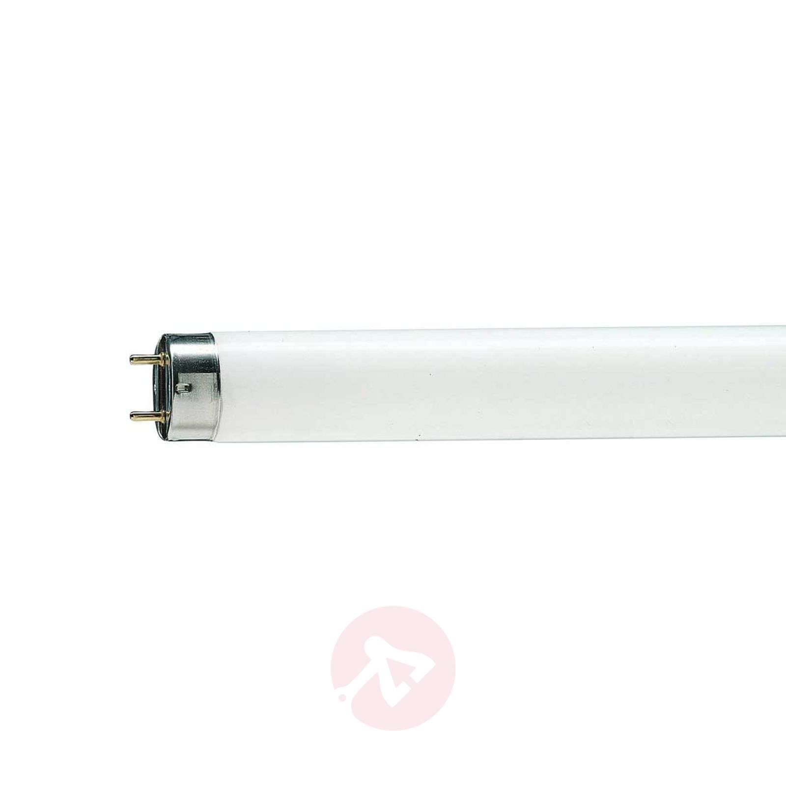 G13 T8 36W TL-lamp MASTER TL-D Graphica 950-7530637-01